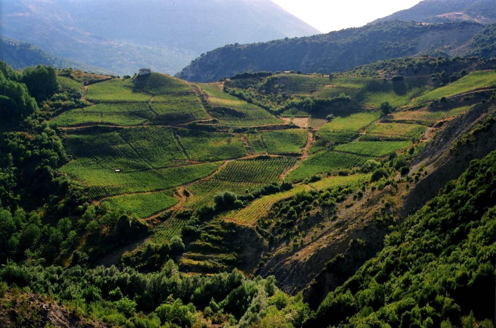 vineyard1 (1) οινοτουρισμος στην ελλαδα μετσοβο
