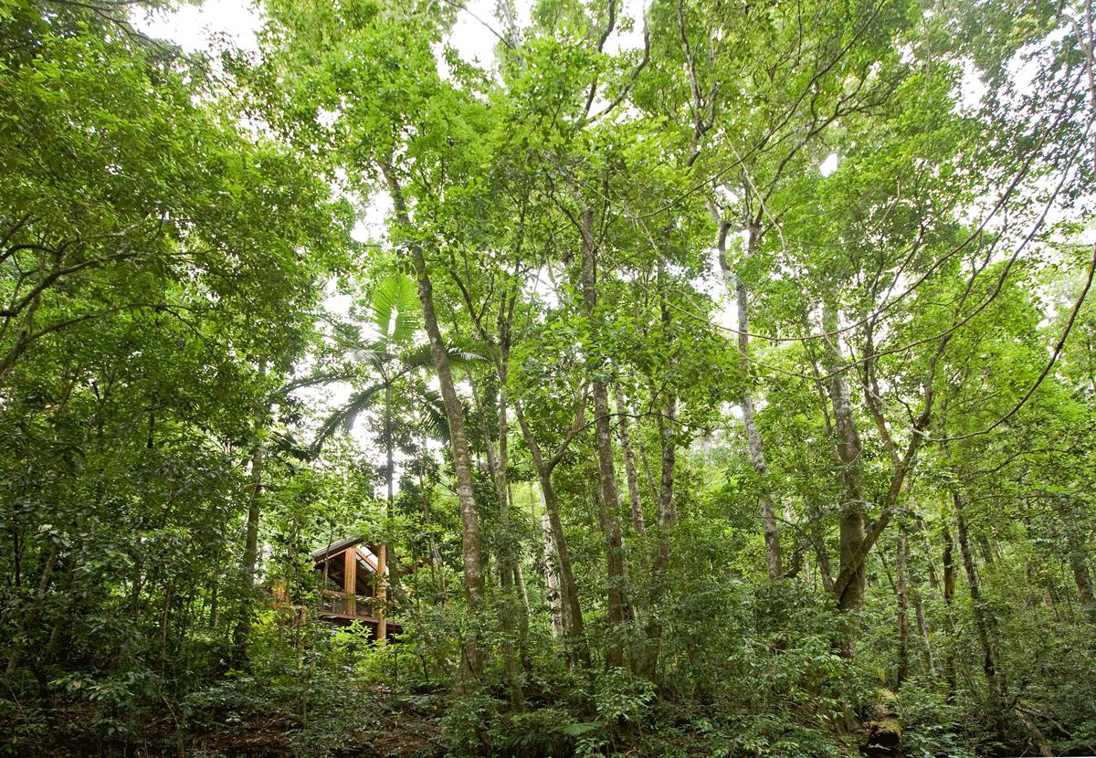 Die Unterkünfte im Grünen Hotel Canopy Treehouses
