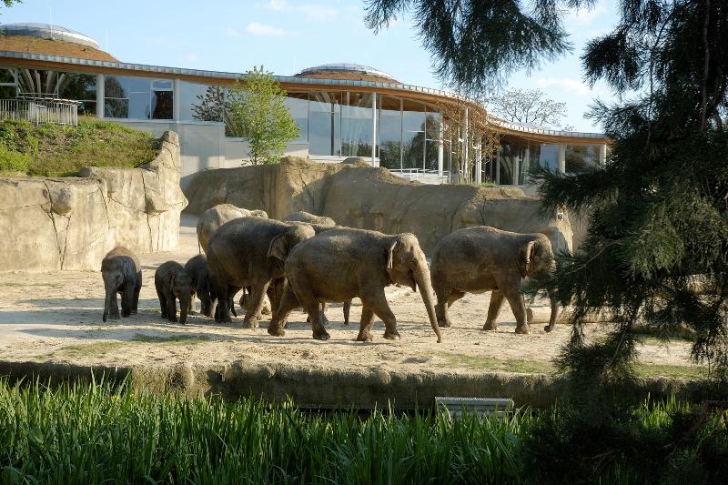 Kölner Zoo Elefanten Elefantenpark Köln