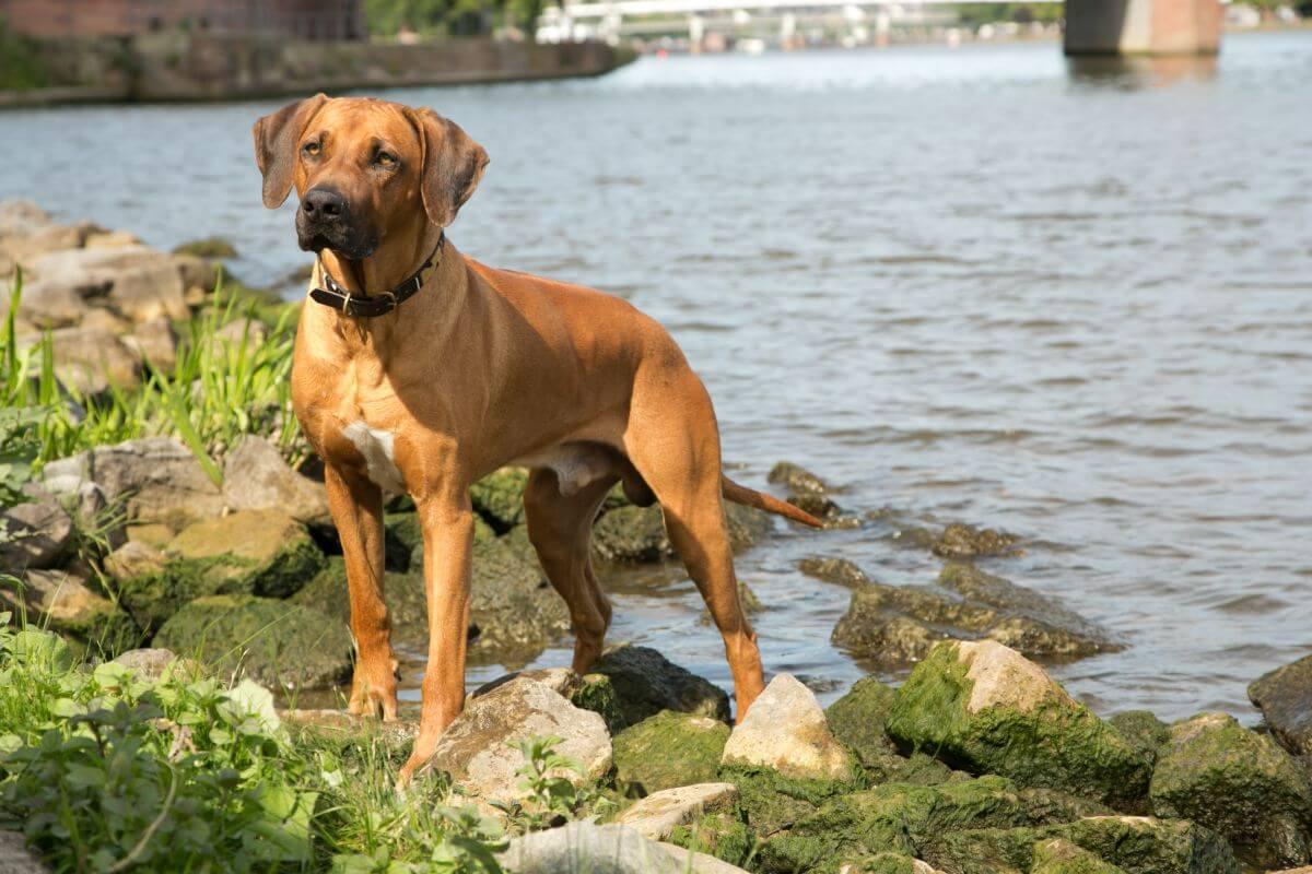 Hund Dayo von HundeReisenMehr