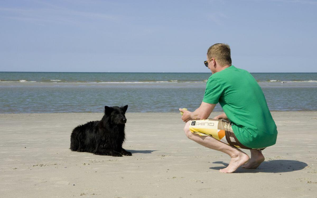 Hund am Strand auf Juist