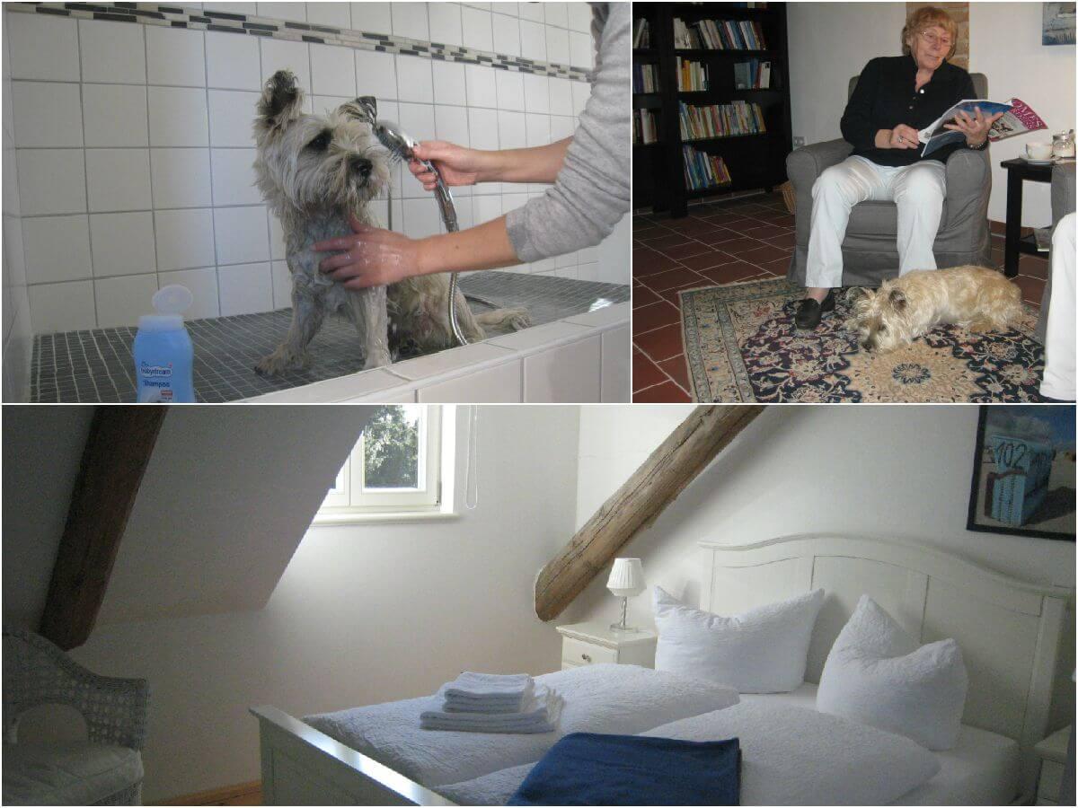 Hotel für Hunde To'n Schlagboom im Wangerland