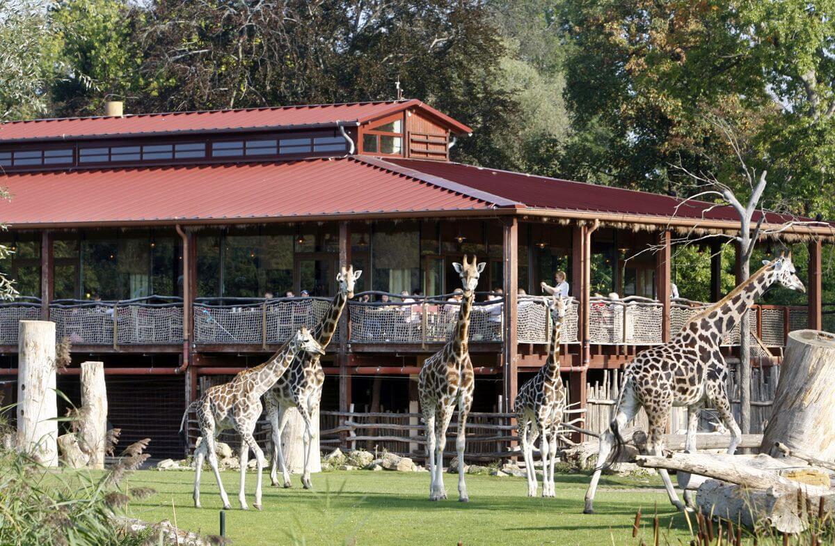 Familienurlaub Leipzig Kiwara Lodge im Leipziger Zoo