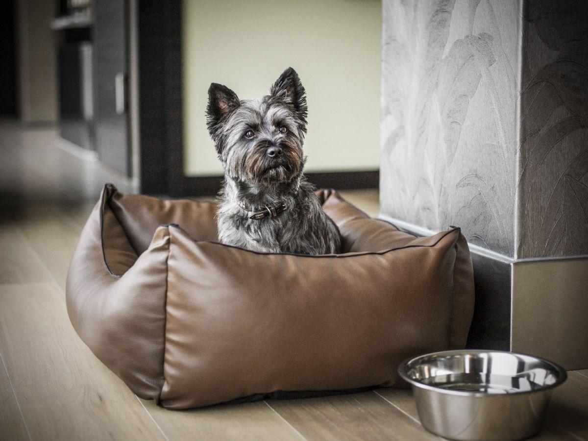 Hundebett im Hotelzimmer