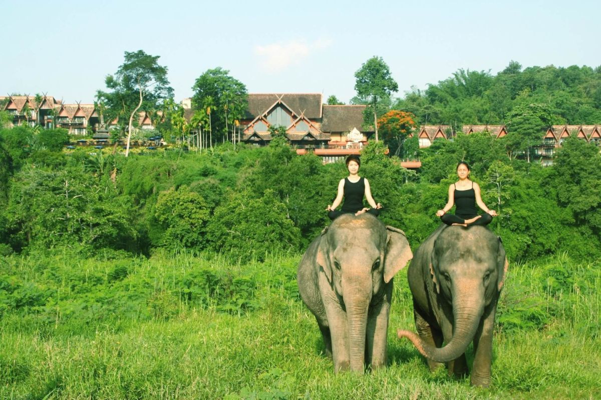 Frauen auf Elefanten in Thailand