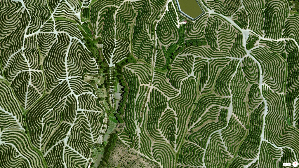 Vineyards, Huelva, Spain - 37°42′12″N 6°36′10″W