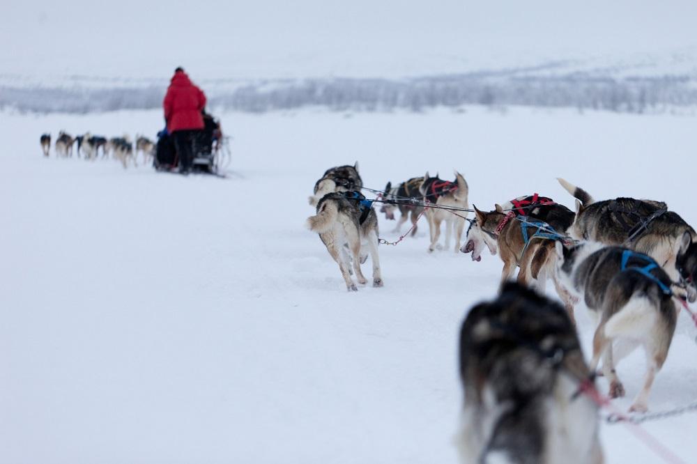 Le slitte trainate dai cani - fotolia © jamenpercy