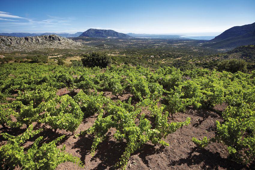 Cliccate per scoprire la Sardegna e il suo Cannonau