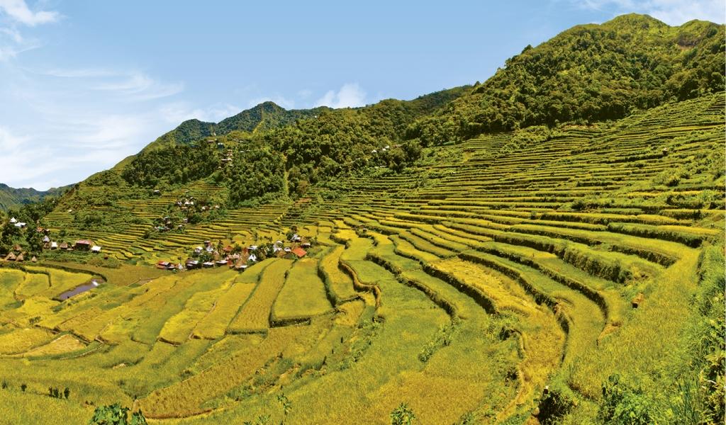 Terrazze di riso a Banaue, nella provincia di Ifugao
