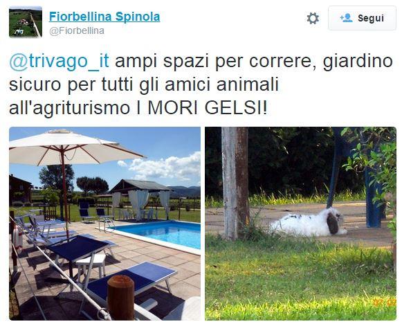 Il tweet de I Mori Gelsi