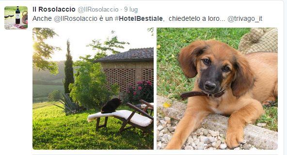 Il tweet del B&B Il Rosolaccio