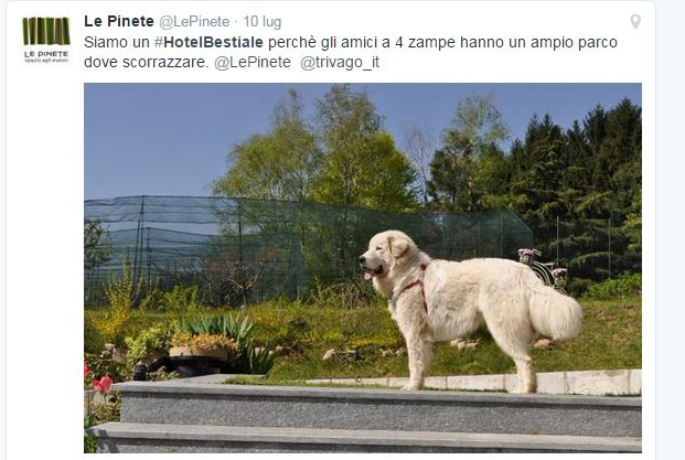 Il tweet del B&B Le Pinete