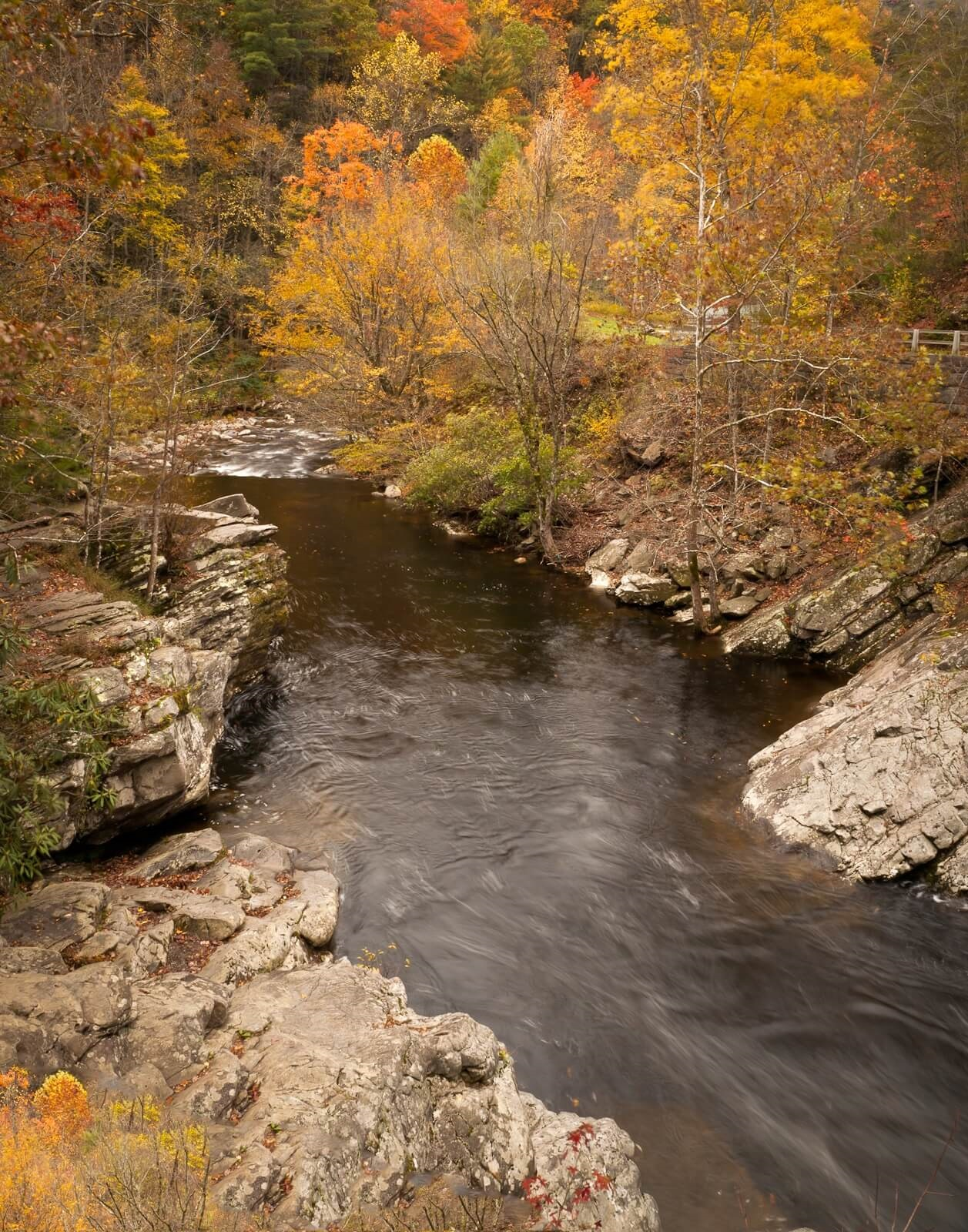 trout-smoky-mountains-fall