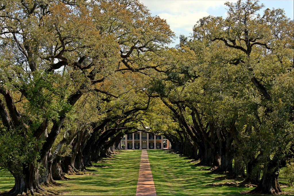 Oak trees at the Oak Alley Plantation