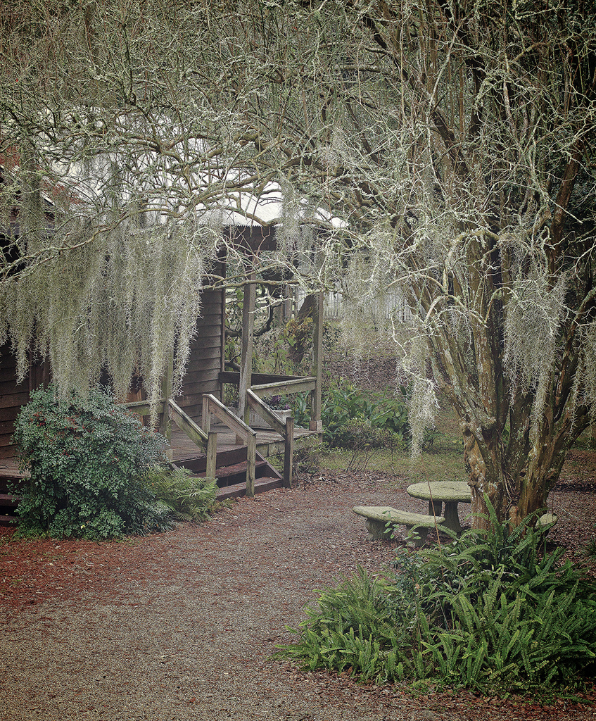 Destrehan Plantation Slave Cabins and Spanish Moss