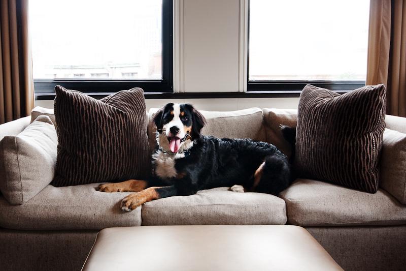 Dog-Friendly hotels Boston