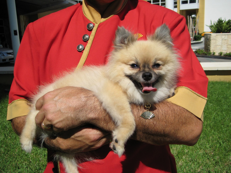 Mandarin Oriental Miami Dog Friendly