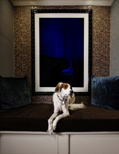 Dog Friendly Hotel Alexis Seattle