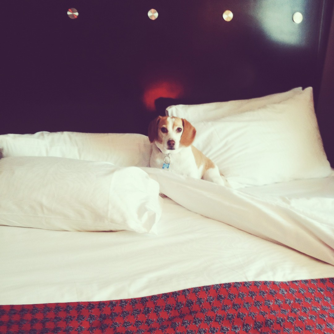 Dog Friendly Hotels San Diego
