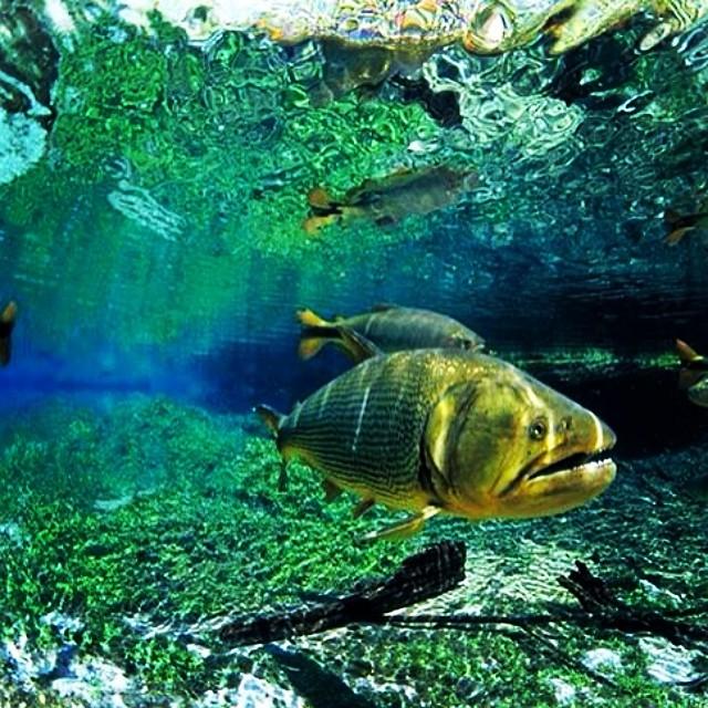Brazil water wildlife