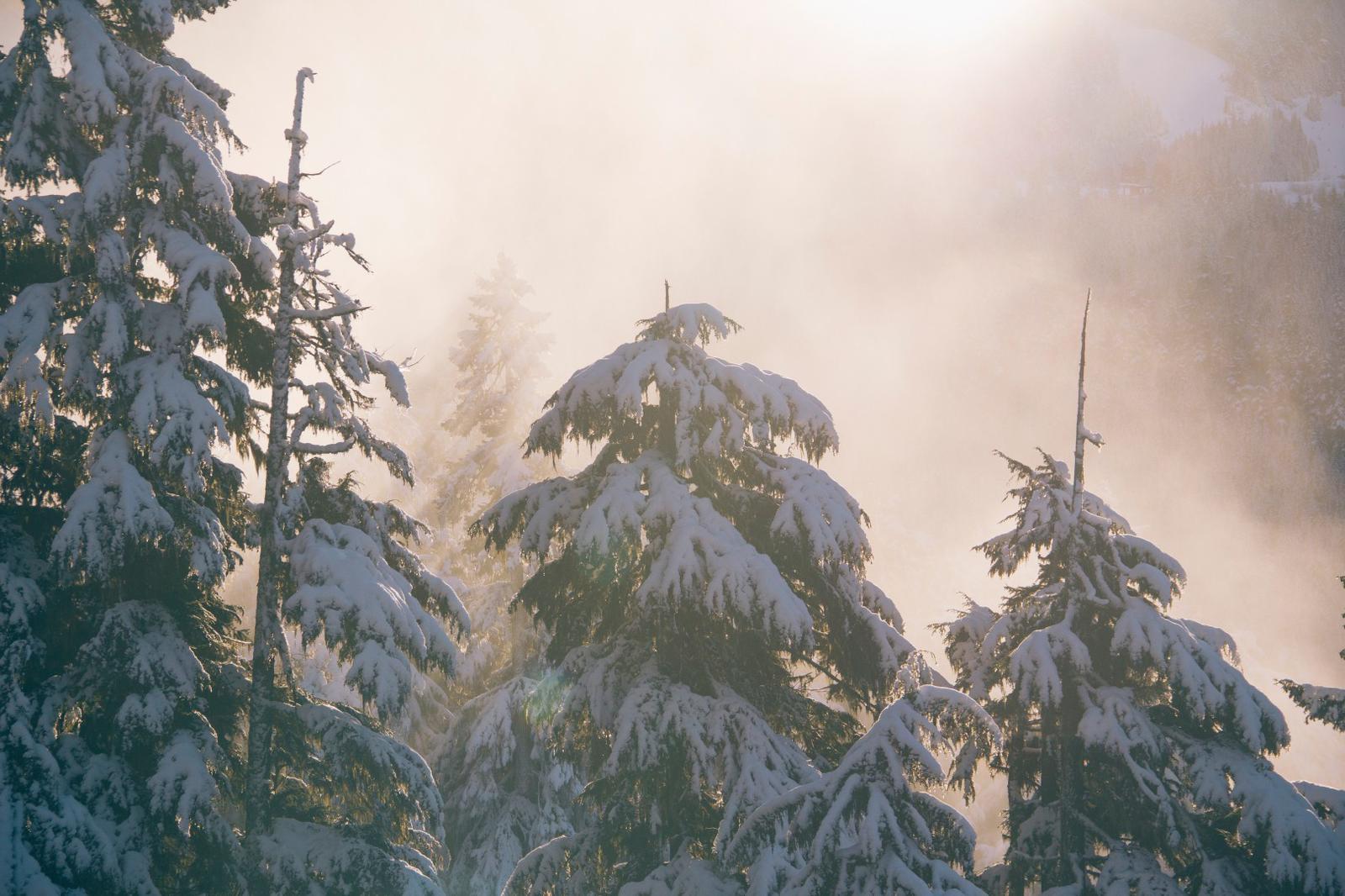 The last bit of sunshine in Alta