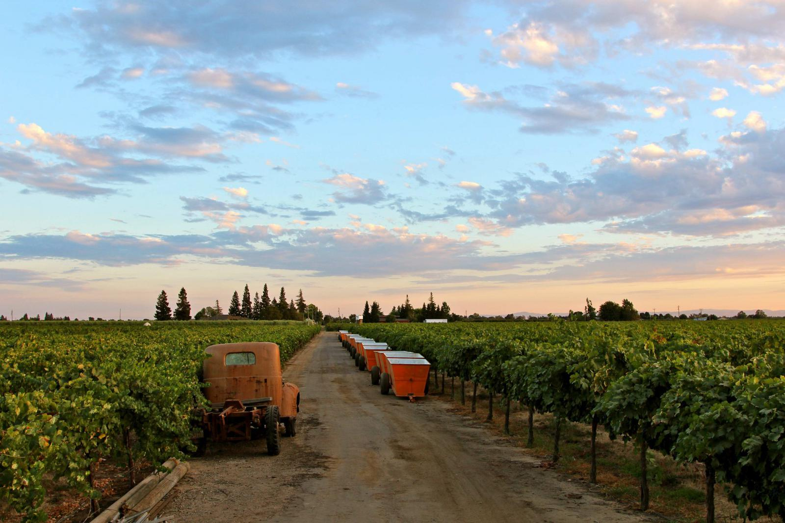 Harney Lane Winery, Lodi
