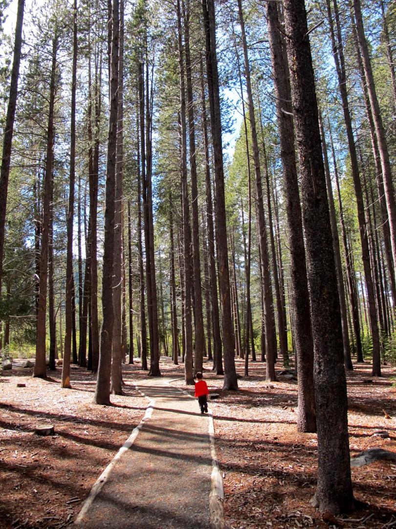 Donner Memorial Park Forest