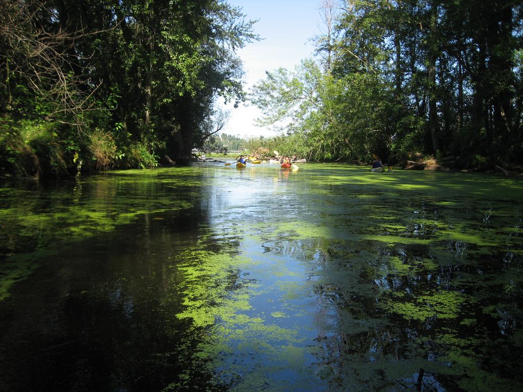 Seattle Arboretum paddling