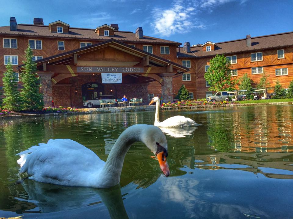 Swans at the Sun Valley Resort