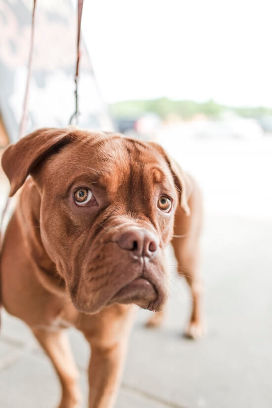 Dog shelters Las Vegas