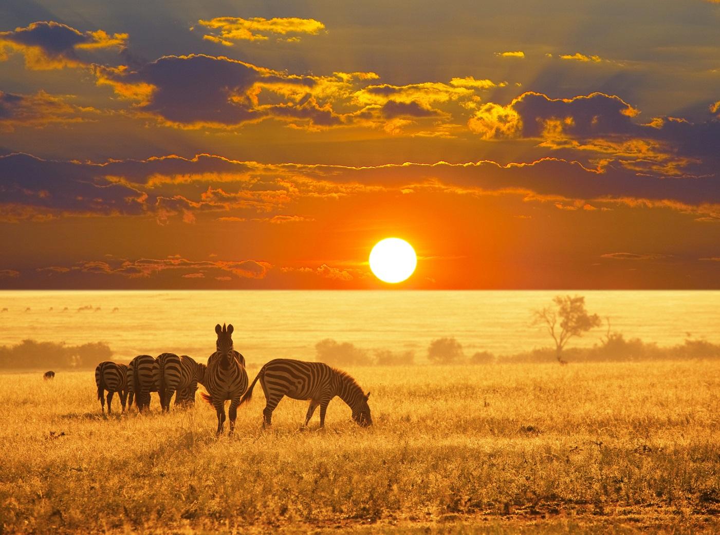 donde viajar en 2014 Zebras