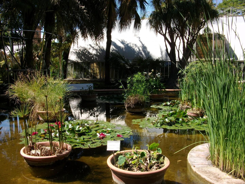 Estanque en el Jardín Botánico de Valencia.
