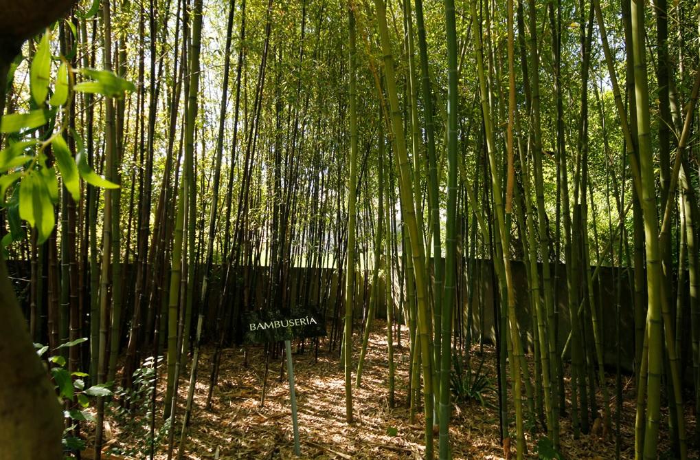 Zona con bambús del Jardín de Sales, Vigo.