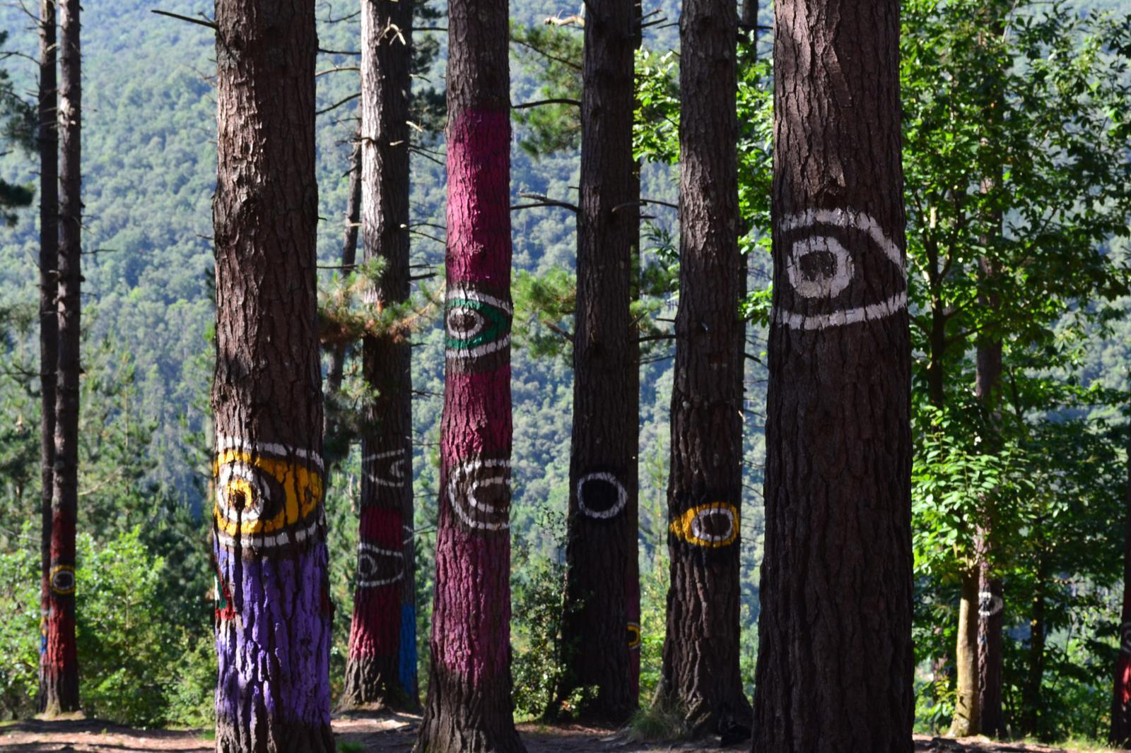 españa verde En el Bosque de Oma.
