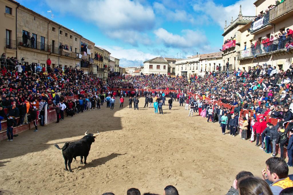 carnaval del toro 2