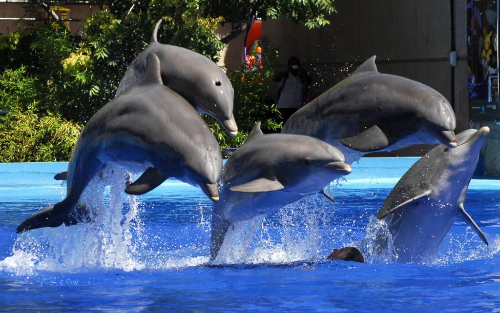espectaculo de delfines en el Zoo de Madrid
