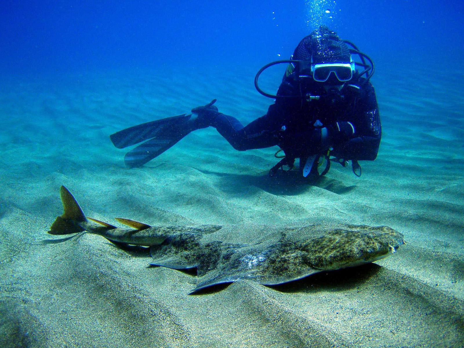 Submarinismo en Lanzarote