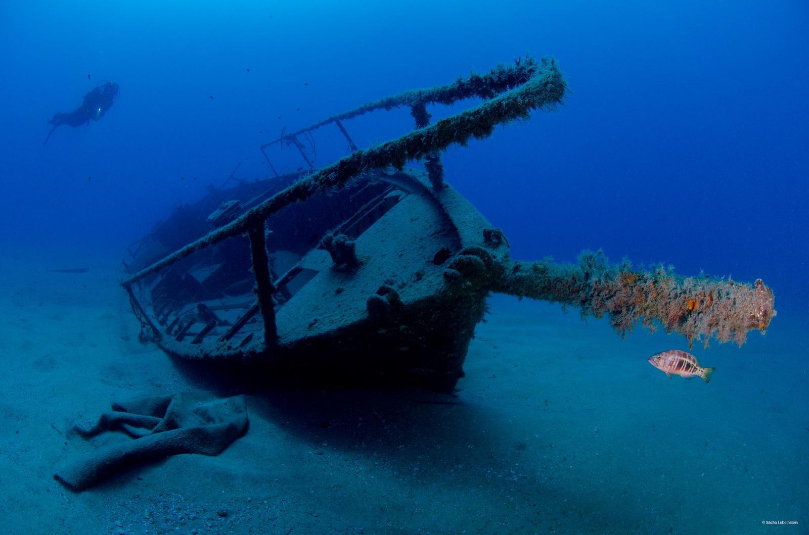 ¿Buscando el paraíso bajo el mar? Nada mejor que hacer snorkeling en el archipiélago canario, puedes encontrar pecios y especies marinas como la catalufa y algas marinas