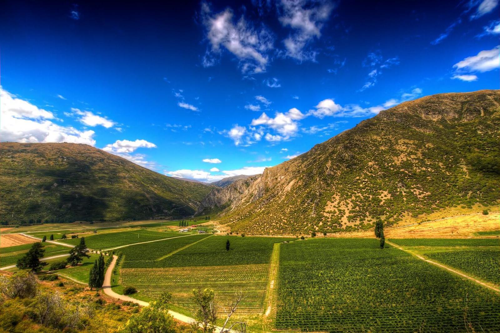 El valle de las vides en Queenstown, Nueva Zelanda. Turismo en Nueva Zelanda. Qué hacer en Nueva Zelanda.