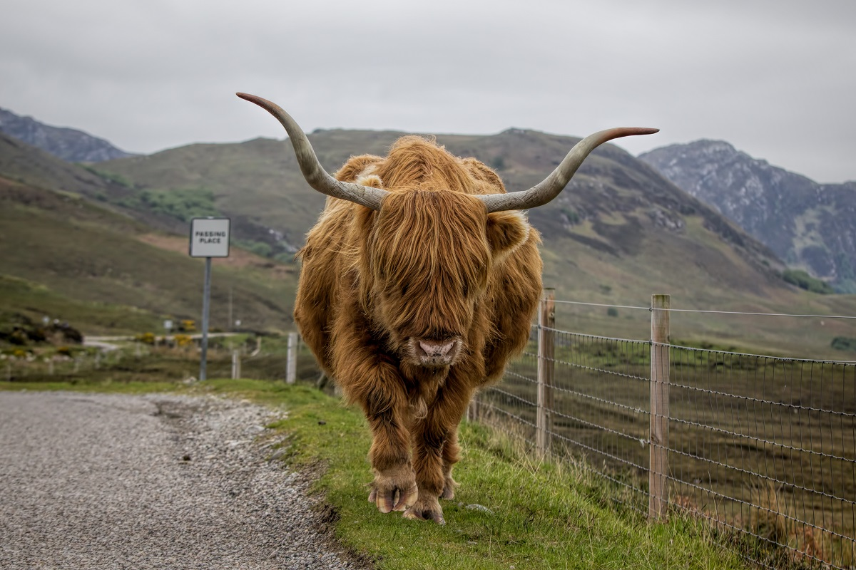 top reasons to do the NC500