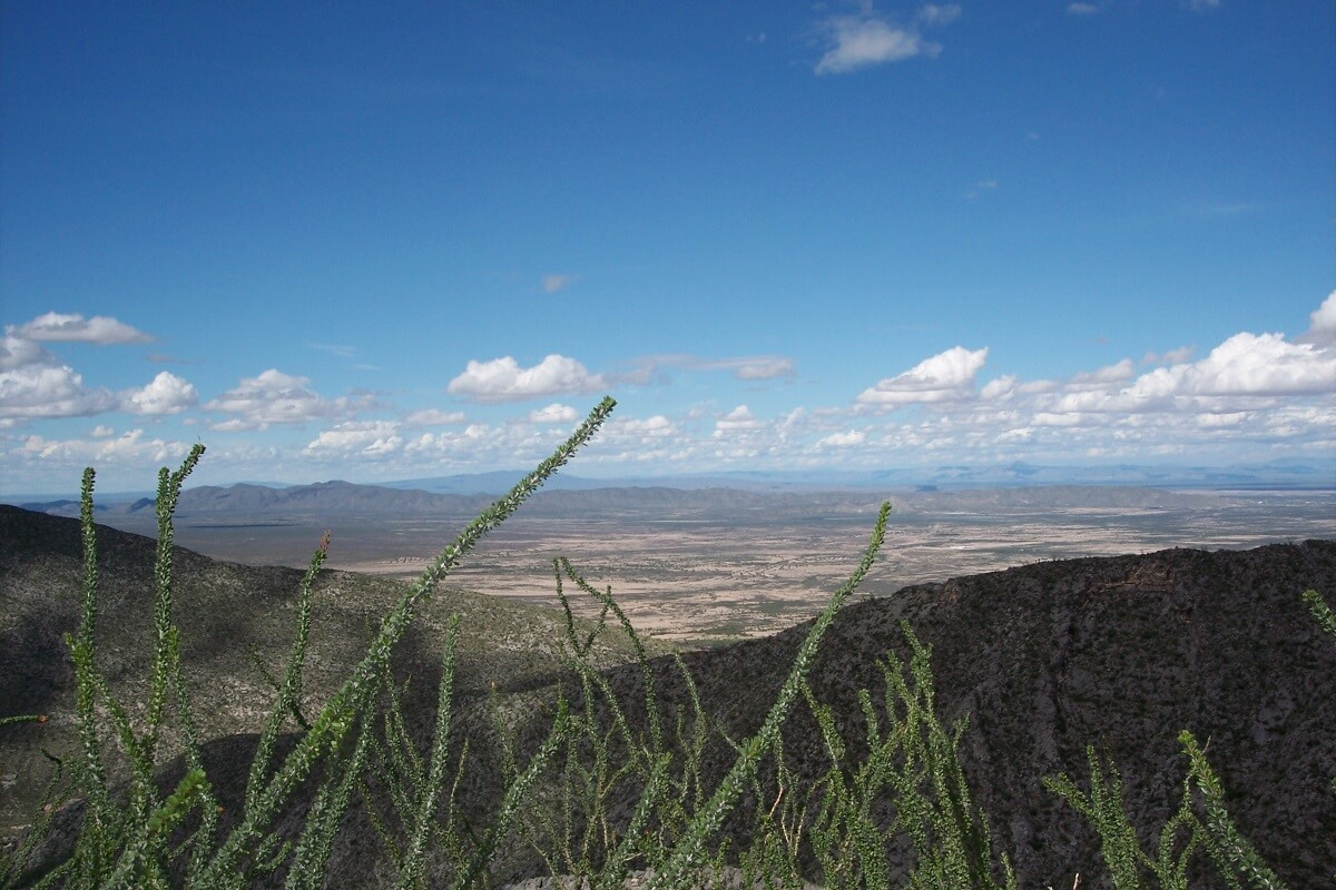 Durango Reserva Mapimí