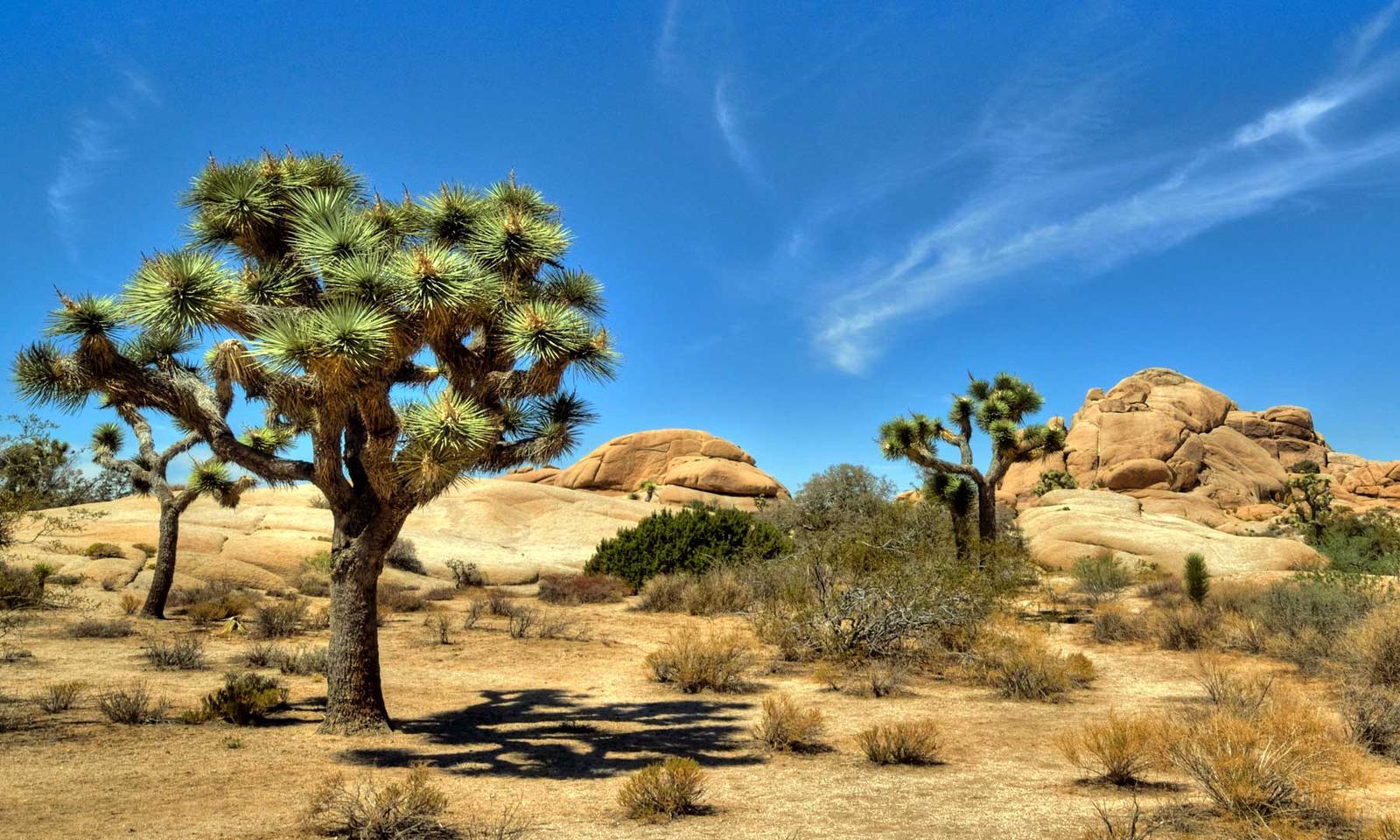 Los Angeles Joshua Tree