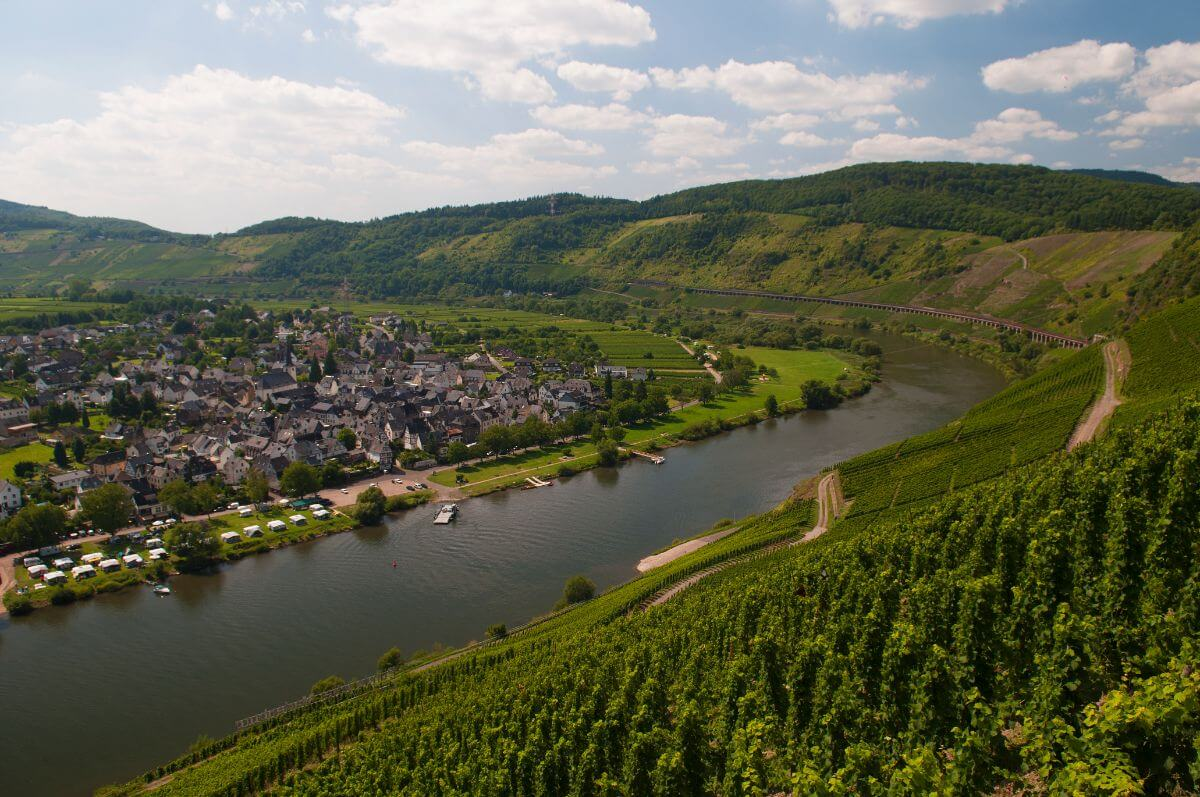 The wine region - Moselle, Germany