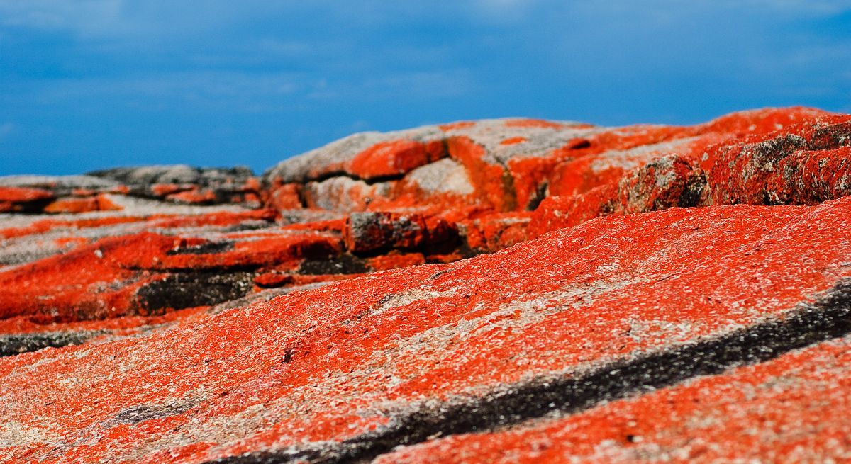 Lichen-encrusted rocks at the Bay of Fires, Tasmania