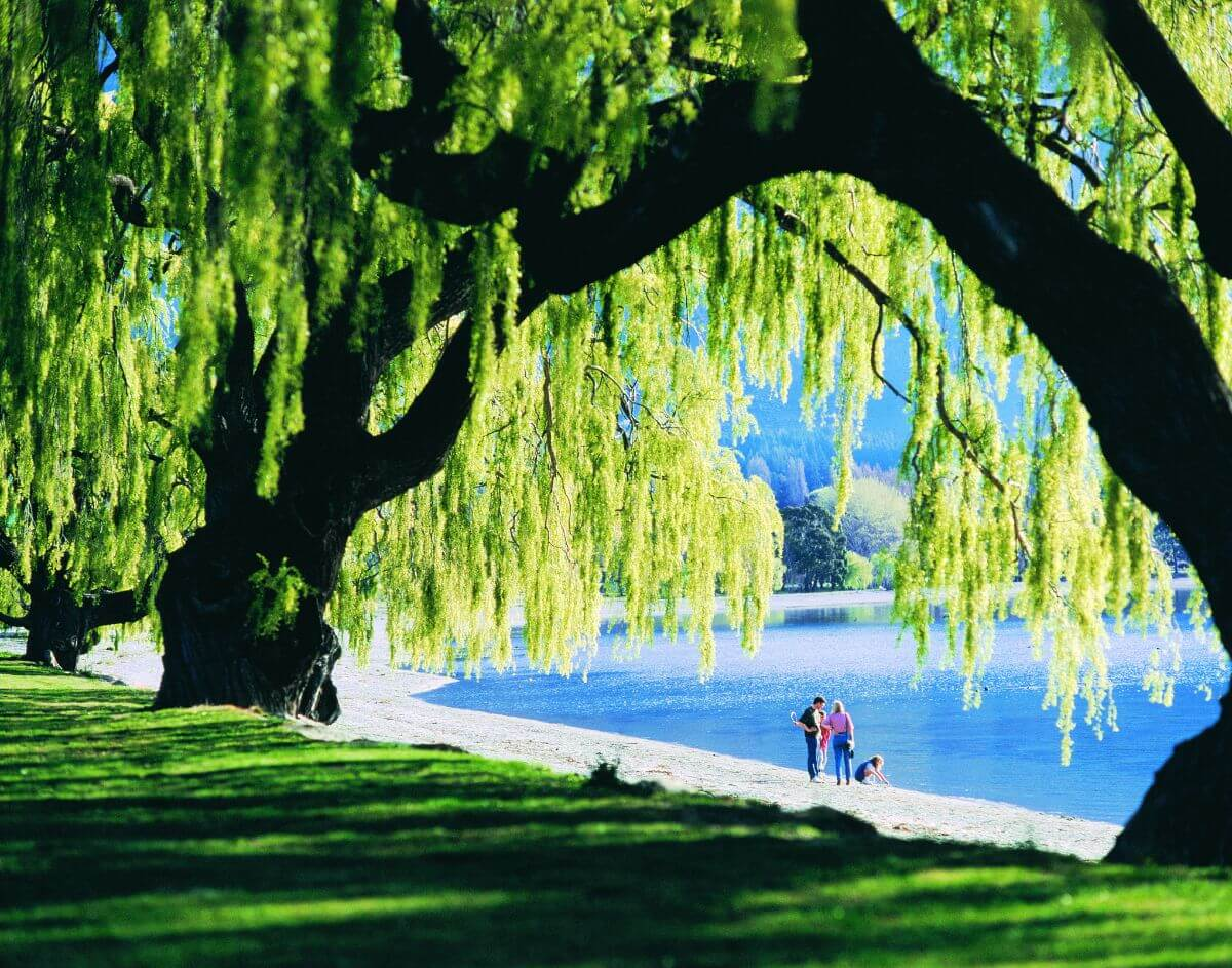 Willows-wanaka-activities (c) Lake Wanaka