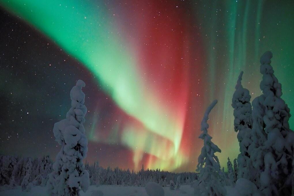 Aurore Boréale au-dessus des sapins enneigés en Laponie Finlandaise