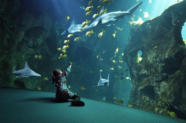 Enfant devant un aquarium de requins - Aquarium de la Rochelle