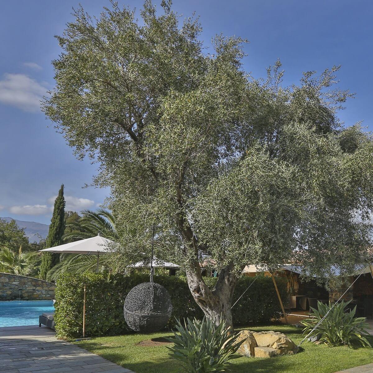 Jardin - Hôtel La Dimora - Oletta - Haute-Corse