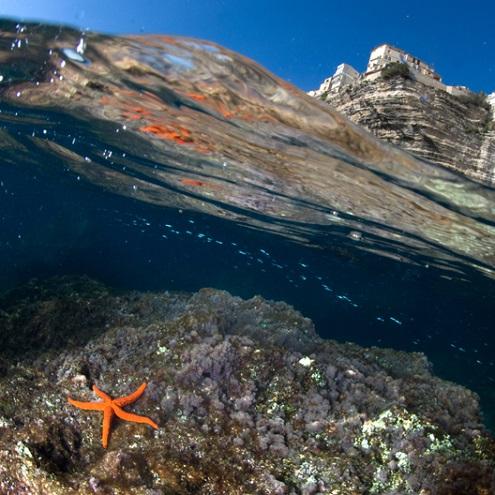 Une étoile de mer avec vue sur les falaises de Bonifacio