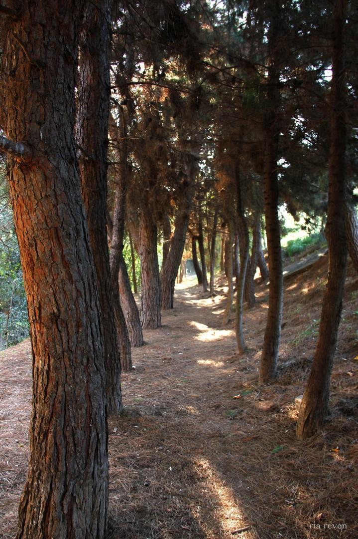 2 1 234-fotografikes-periplaniseis-sti-thessaloniki © sotiria revenisiou